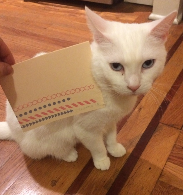 Crackers the cat loves zines!